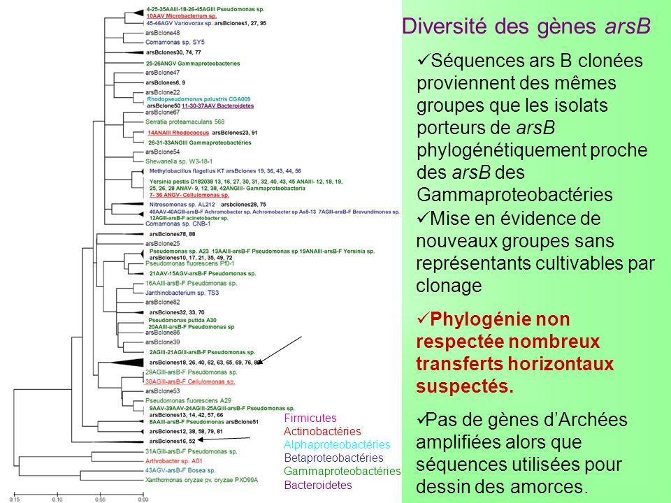Diversité des gènes arsB Firmicutes Actinobactéries Alphaproteobactéries Betaproteobactéries Gammaproteobactéries Bacteroidetes Séquences ars B clonée