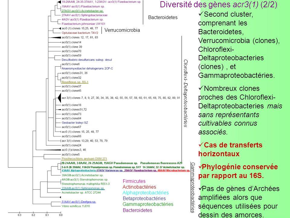 Diversité des gènes acr3(1) (2/2) Firmicutes Actinobactéries Alphaproteobactéries Betaproteobactéries Gammaproteobactéries Bacteroidetes Bacteroidetes