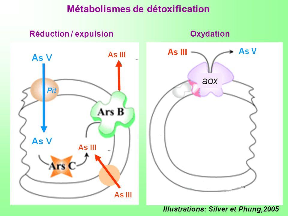 Illustrations: Silver et Phung,2005 Réduction / expulsionOxydation Métabolismes de détoxification