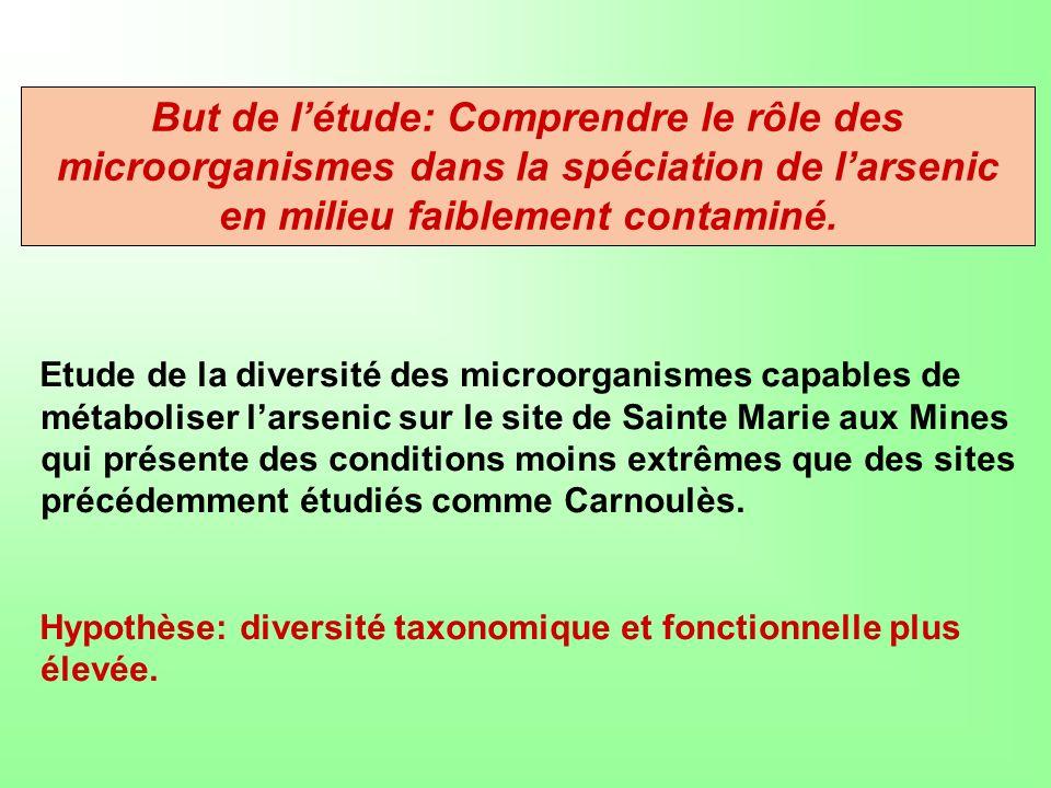 Etude de la diversité des microorganismes capables de métaboliser larsenic sur le site de Sainte Marie aux Mines qui présente des conditions moins ext
