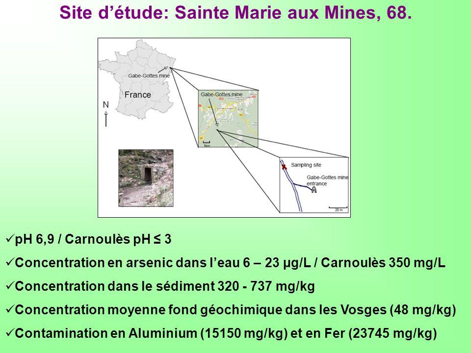 Site détude: Sainte Marie aux Mines, 68. pH 6,9 / Carnoulès pH 3 Concentration en arsenic dans leau 6 – 23 µg/L / Carnoulès 350 mg/L Concentration dan