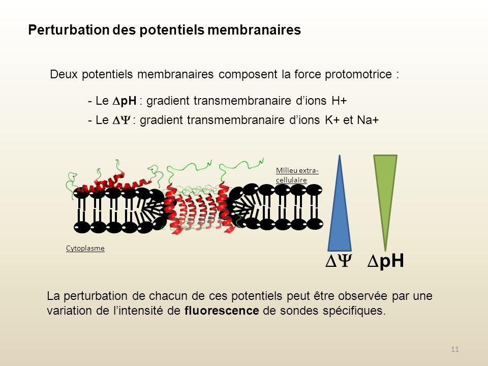 Perturbation des potentiels membranaires Deux potentiels membranaires composent la force protomotrice : La perturbation de chacun de ces potentiels pe