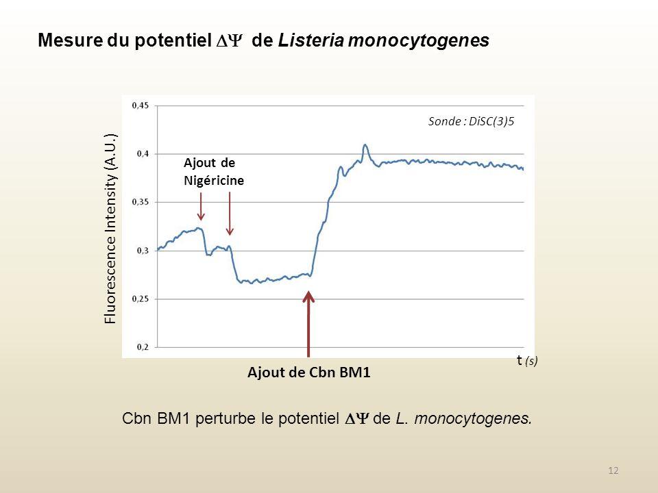 Mesure du potentiel de Listeria monocytogenes Fluorescence Intensity (A.U.) Ajout de Cbn BM1 Cbn BM1 perturbe le potentiel de L. monocytogenes. Sonde
