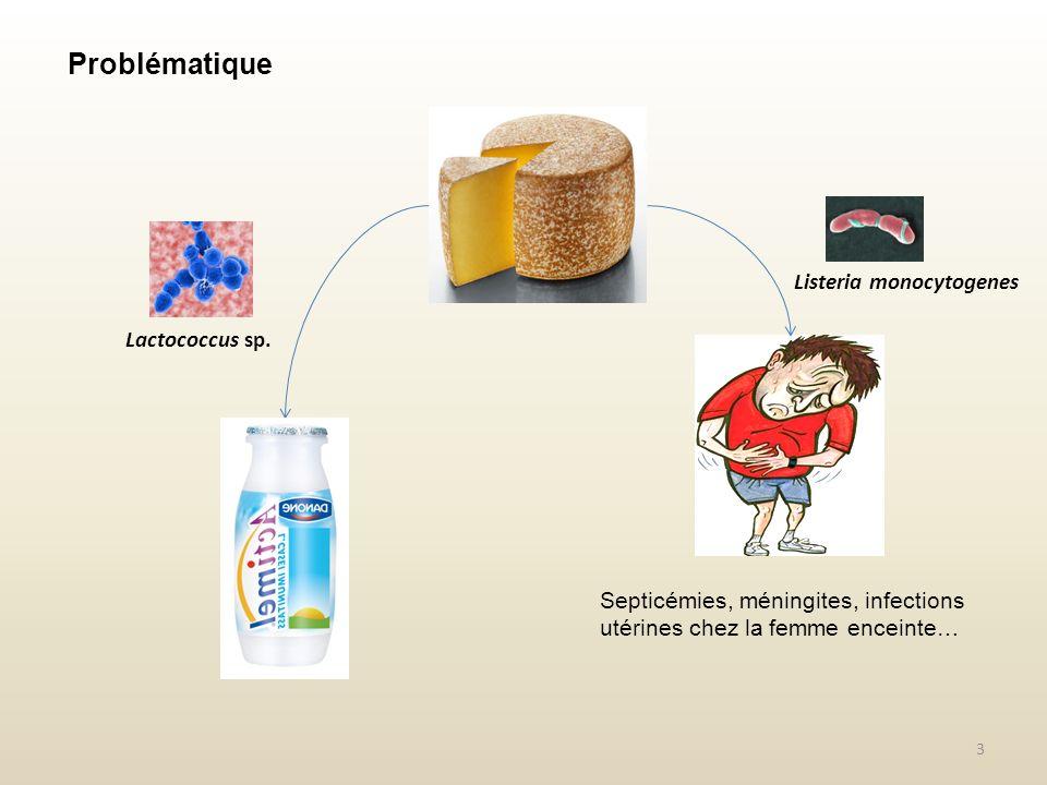 4 Lactococcus lactis Listeria monocytogenes Bactériocine (Nisine, E234) Problématique