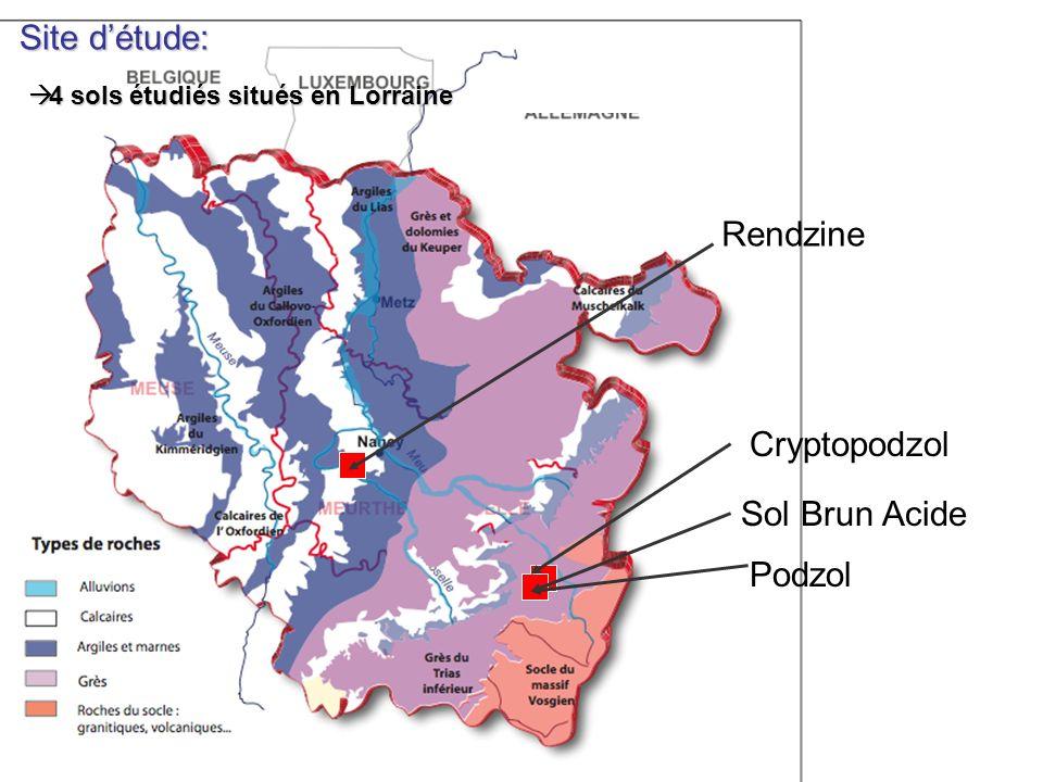 Site détude: 4 sols étudiés situés en Lorraine 4 sols étudiés situés en Lorraine Cryptopodzol Sol Brun Acide Rendzine Roche mère ( R) Horizon C (Roche mère en cours de désagrégation) Horizon B Litière Horizon A (contient de la matière organique) Podzol 1 m