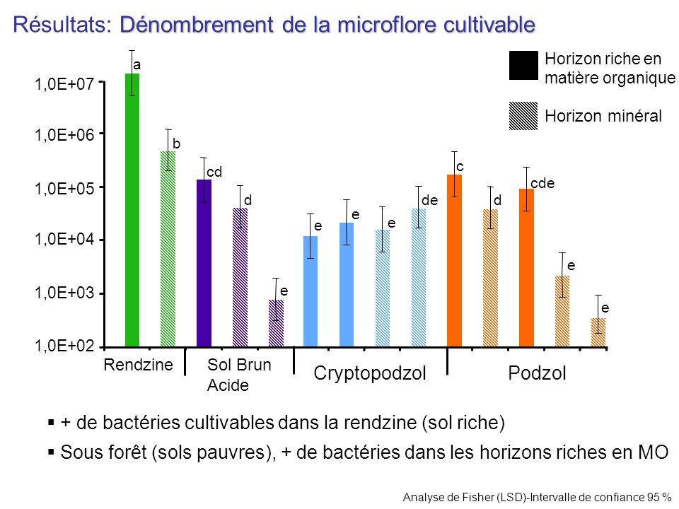 Dénombrement de la microflore cultivable Résultats: Dénombrement de la microflore cultivable + de bactéries cultivables dans la rendzine (sol riche) S