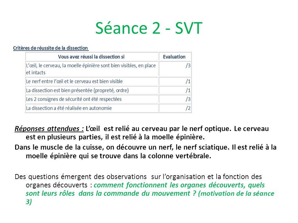 Séance 2 - SVT Réponses attendues : Lœil est relié au cerveau par le nerf optique. Le cerveau est en plusieurs parties, il est relié à la moelle épini
