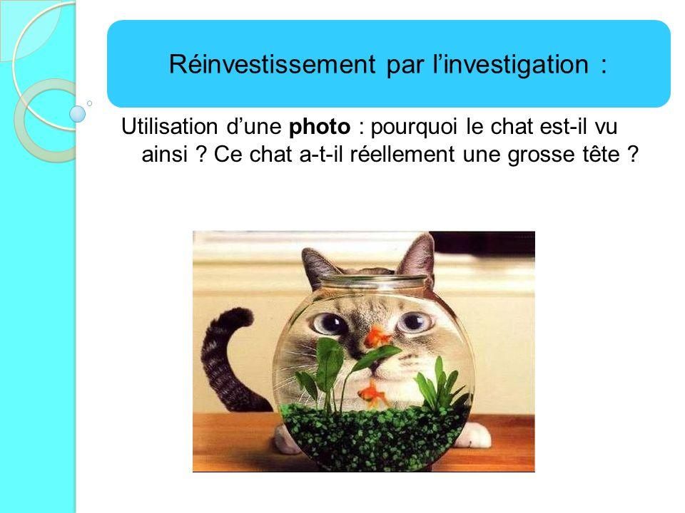 Réinvestissement par linvestigation : Utilisation dune photo : pourquoi le chat est-il vu ainsi ? Ce chat a-t-il réellement une grosse tête ?