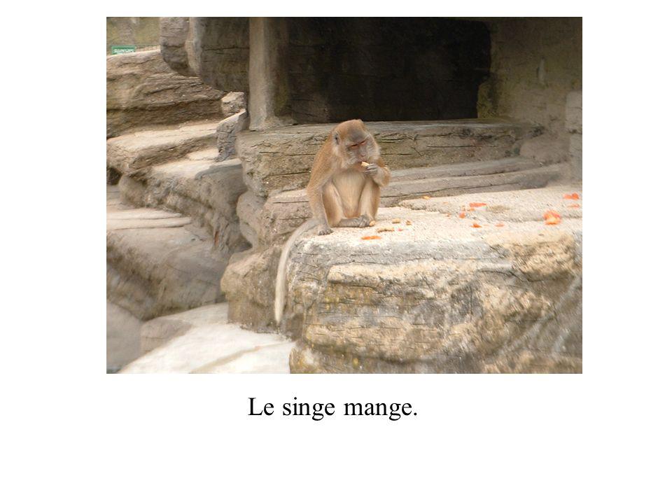 Le singe mange.