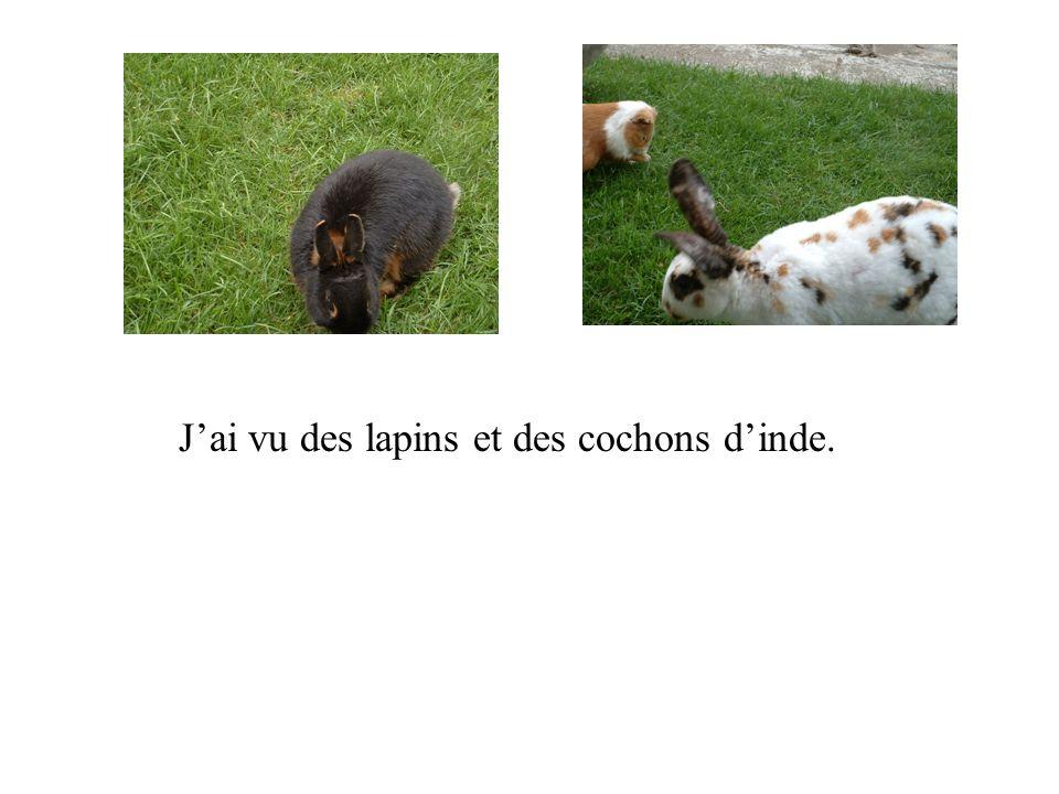 Jai vu des lapins et des cochons dinde.