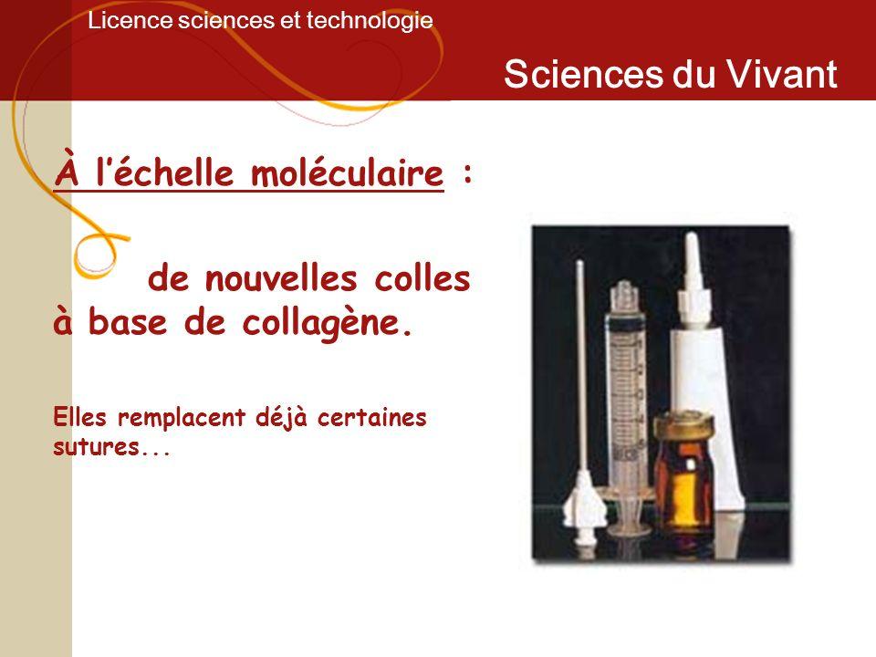 Licence sciences et technologie Sciences du Vivant À léchelle moléculaire : de nouvelles colles à base de collagène. Elles remplacent déjà certaines s
