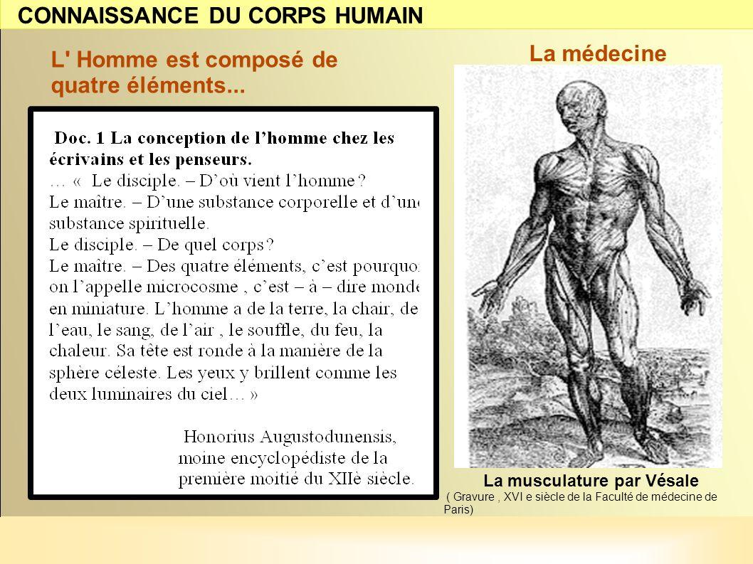 L' Homme est composé de quatre éléments... La musculature par Vésale ( Gravure, XVI e siècle de la Faculté de médecine de Paris) La médecine CONNAISSA