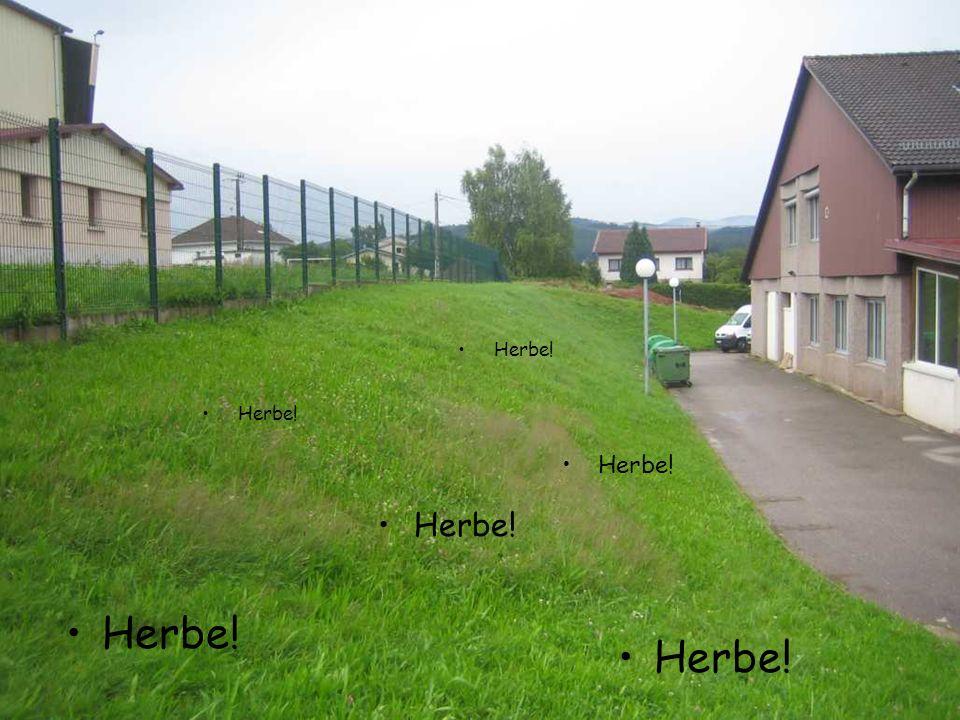 Herbe!