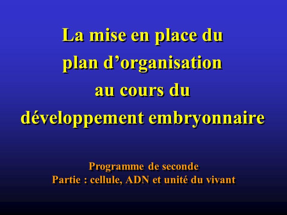 La mise en place du plan dorganisation au cours du développement embryonnaire Programme de seconde Partie : cellule, ADN et unité du vivant