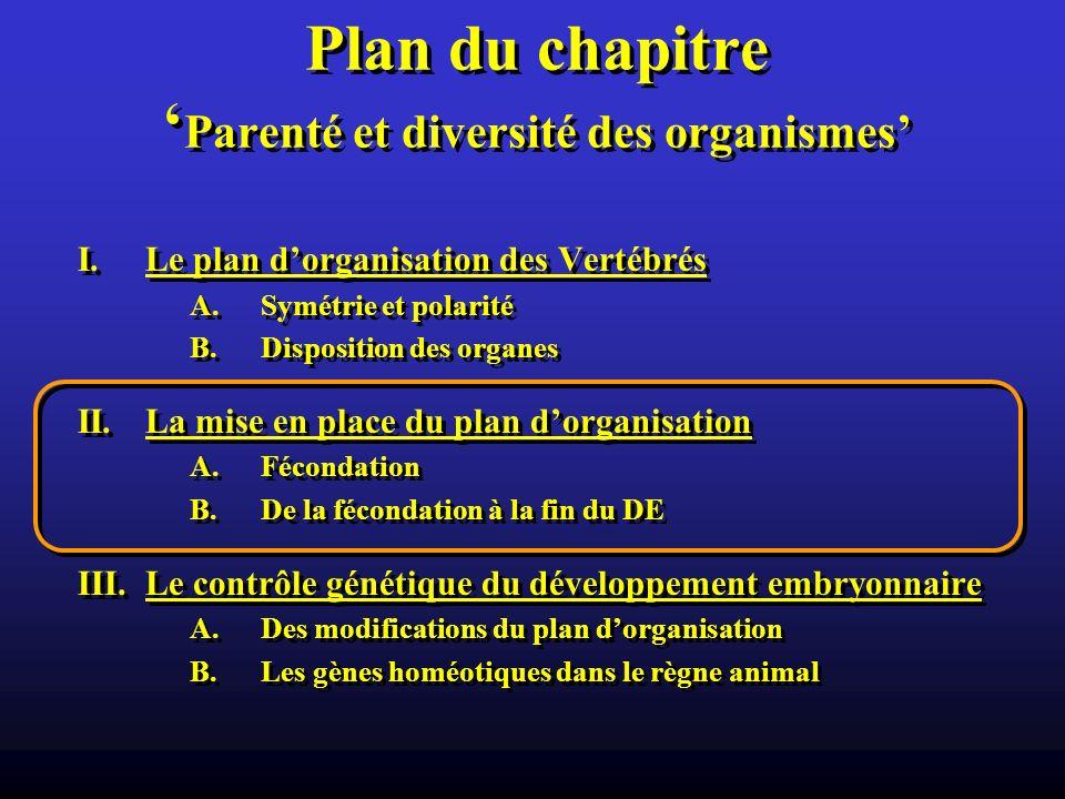Plan du chapitre Parenté et diversité des organismes I.Le plan dorganisation des Vertébrés A.Symétrie et polarité B.Disposition des organes II.La mise