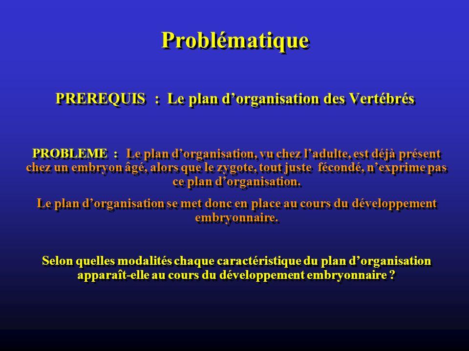Problématique PREREQUIS : Le plan dorganisation des Vertébrés PROBLEME : Le plan dorganisation, vu chez ladulte, est déjà présent chez un embryon âgé,