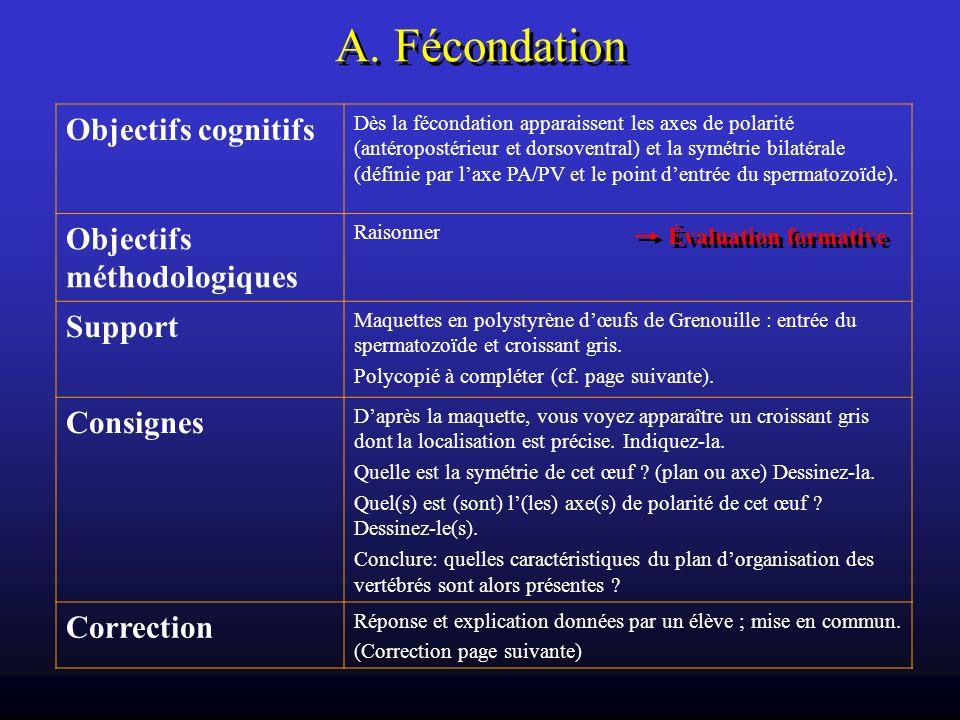 A. Fécondation Objectifs cognitifs Dès la fécondation apparaissent les axes de polarité (antéropostérieur et dorsoventral) et la symétrie bilatérale (