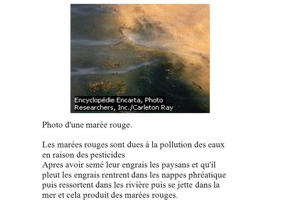 Photo d'une marée rouge. Les marées rouges sont dues à la pollution des eaux en raison des pesticides Apres avoir semé leur engrais les paysans et qu'