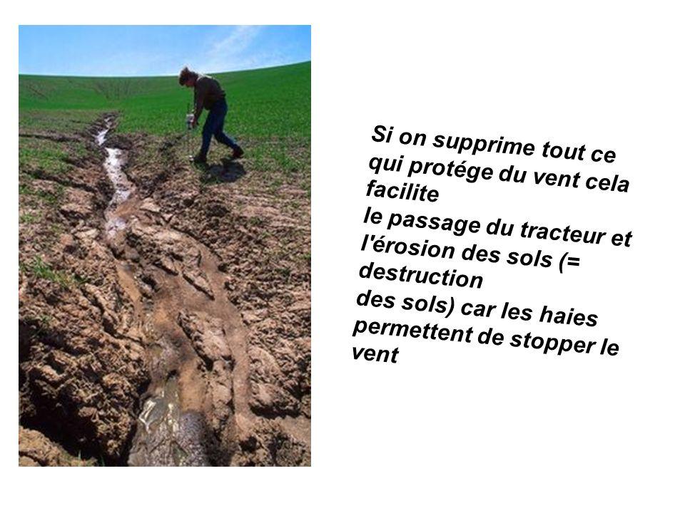 Si on supprime tout ce qui protége du vent cela facilite le passage du tracteur et l'érosion des sols (= destruction des sols) car les haies permetten
