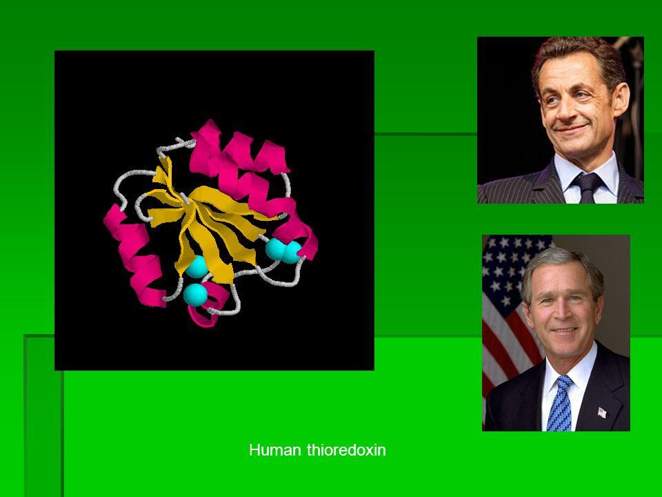 Human thioredoxin