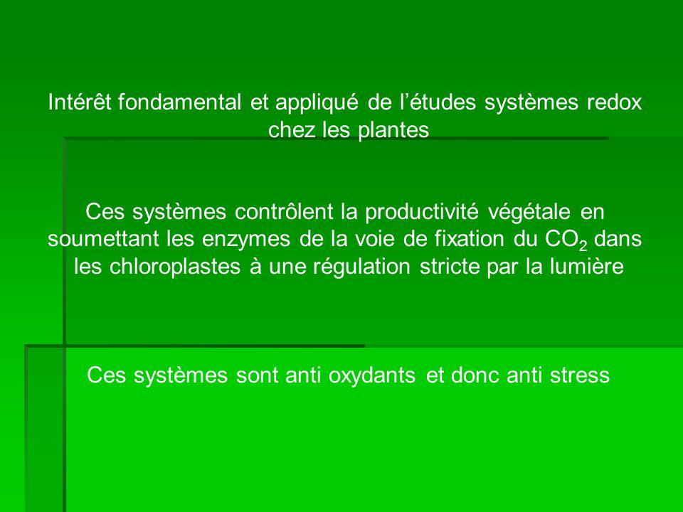 Intérêt fondamental et appliqué de létudes systèmes redox chez les plantes Ces systèmes contrôlent la productivité végétale en soumettant les enzymes de la voie de fixation du CO 2 dans les chloroplastes à une régulation stricte par la lumière Ces systèmes sont anti oxydants et donc anti stress