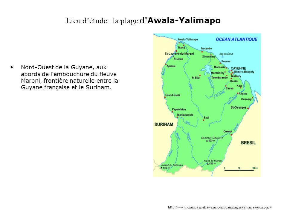 Lieu détude : la plage d'Awala-Yalimapo Nord-Ouest de la Guyane, aux abords de l'embouchure du fleuve Maroni, frontière naturelle entre la Guyane fran