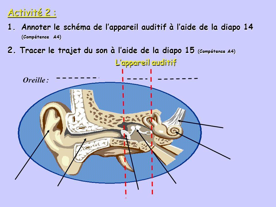 Les cellules ciliées de lappareil auditif Les cellules ciliées (20 000) se trouvent dans la cochlée ou limaçon. Elles reçoivent les vibrations et les