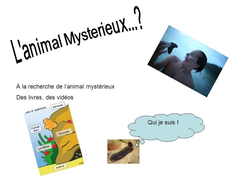 À la recherche de lanimal mystérieux Des livres, des vidéos Qui je suis !