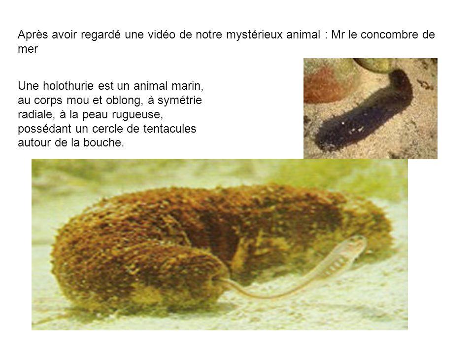 Après avoir regardé une vidéo de notre mystérieux animal : Mr le concombre de mer Une holothurie est un animal marin, au corps mou et oblong, à symétr