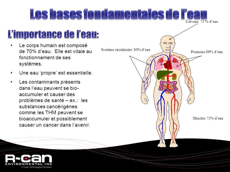 Le corps humain est composé de 70% deau.Elle est vitale au fonctionnement de ses systèmes.