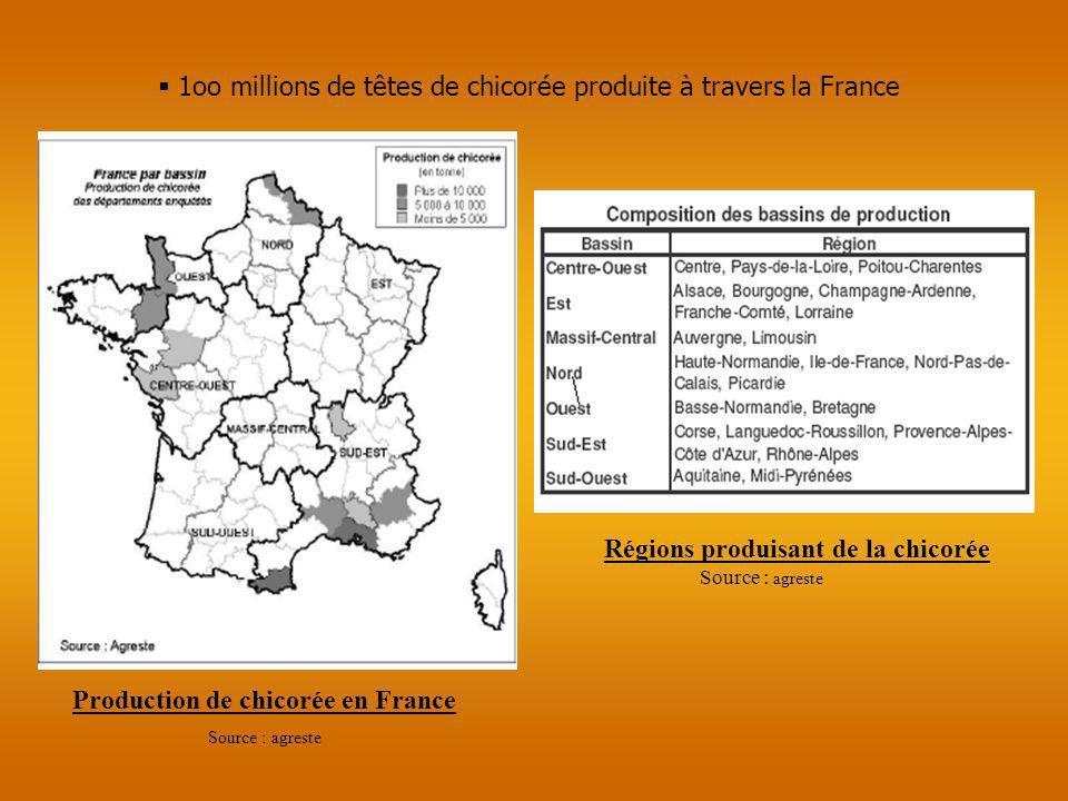Production de chicorée en France Source : agreste Régions produisant de la chicorée 1oo millions de têtes de chicorée produite à travers la France Sou