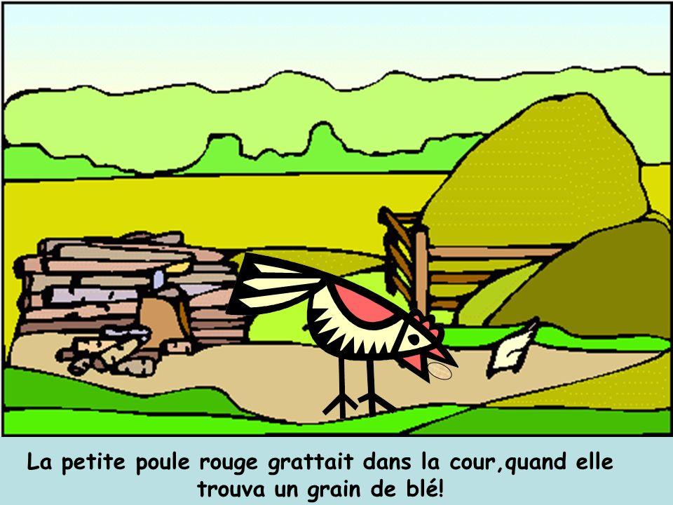 La petite poule rouge grattait dans la cour,quand elle trouva un grain de blé!