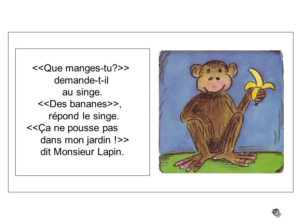 > demande-t-il au singe. >, répond le singe. <<Ça ne pousse pas dans mon jardin !>> dit Monsieur Lapin.