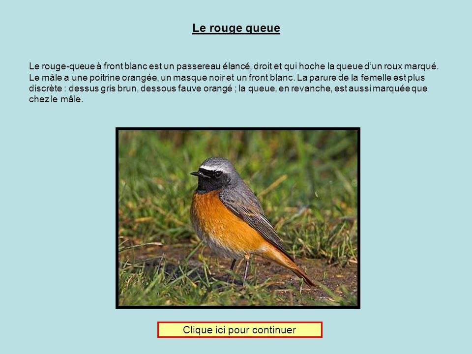 Je donne ma langue au chat Clique sur limage du rouge queue