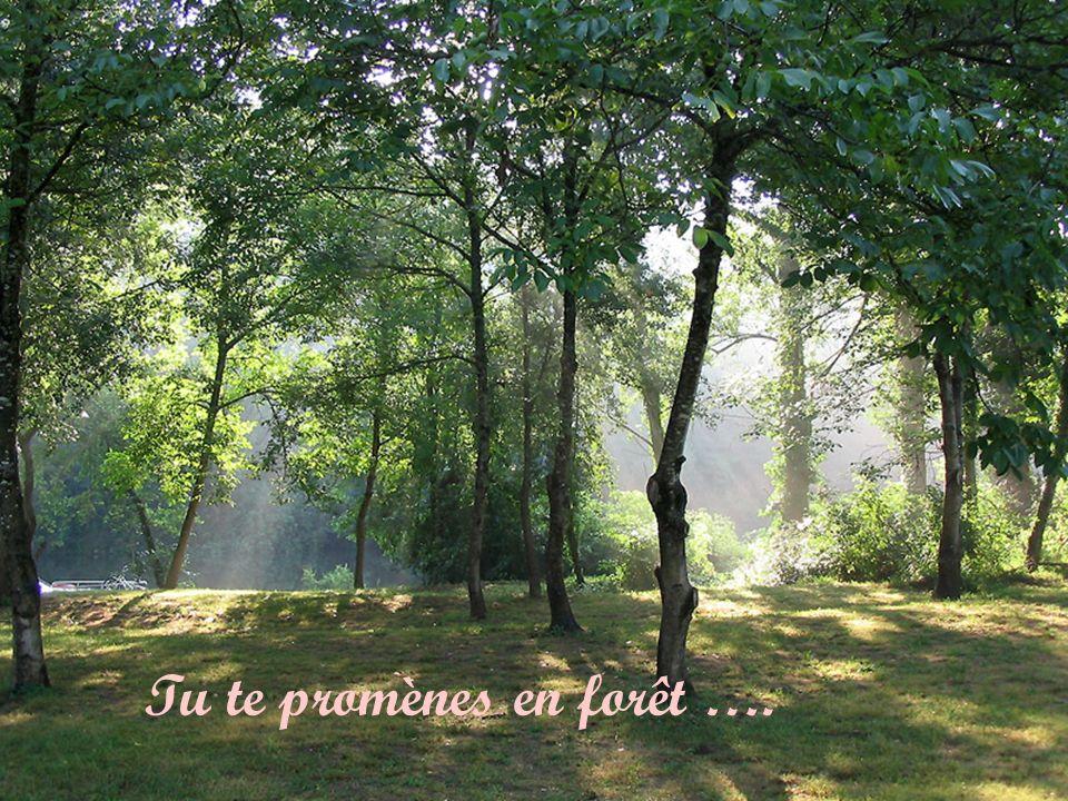 Tu te promènes en forêt ….