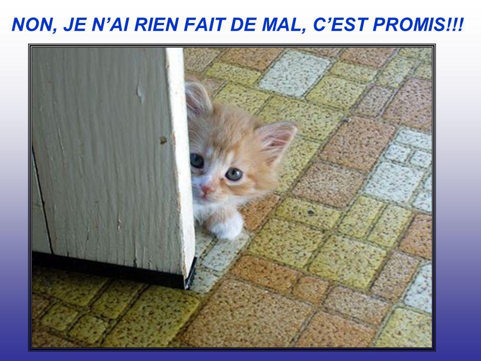 NON, JE NAI RIEN FAIT DE MAL, CEST PROMIS!!!