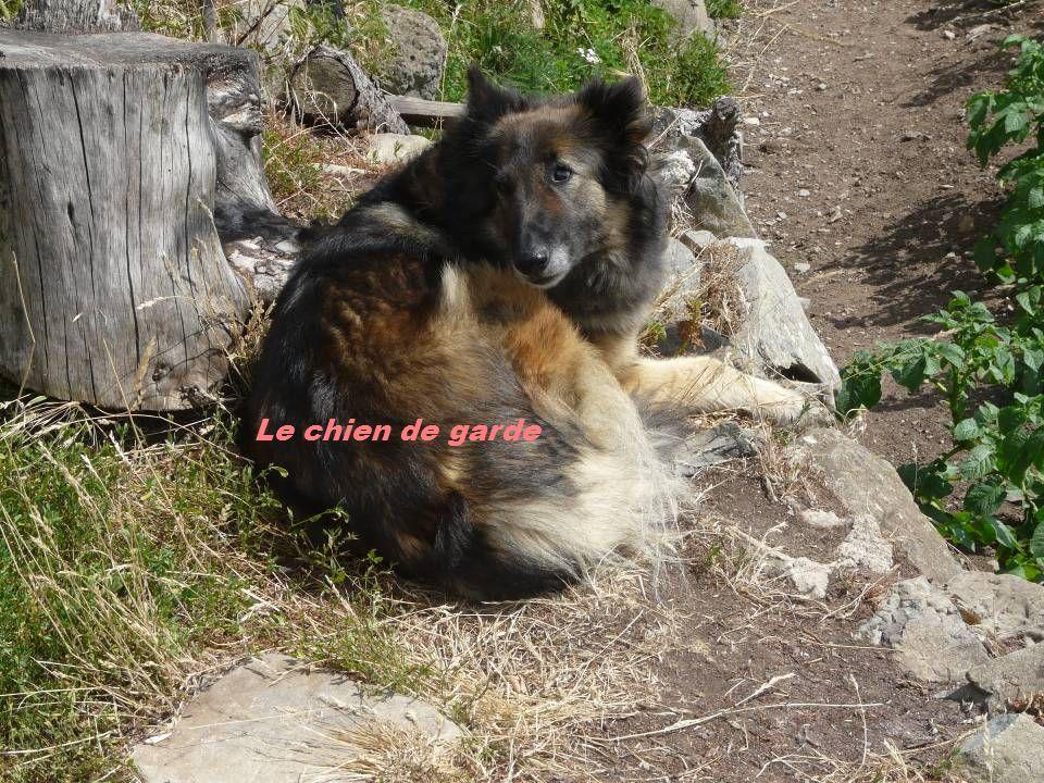 Le chien de garde