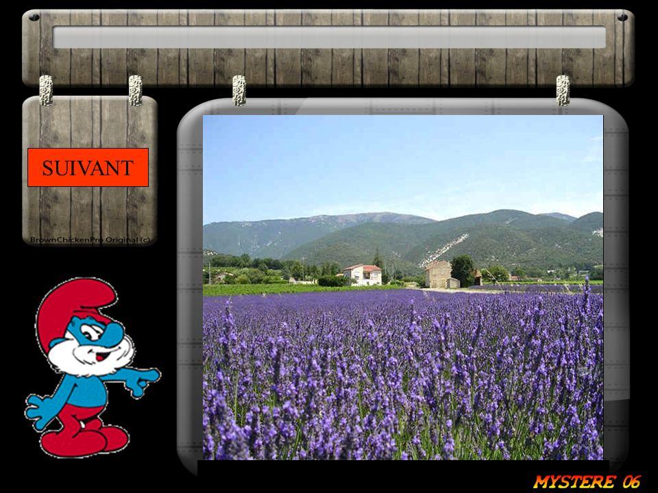 Du fond de la Provence, sous le mistral elle danse. De son cœur née l essence et d une couleur elle a donnée naissance. Réponse