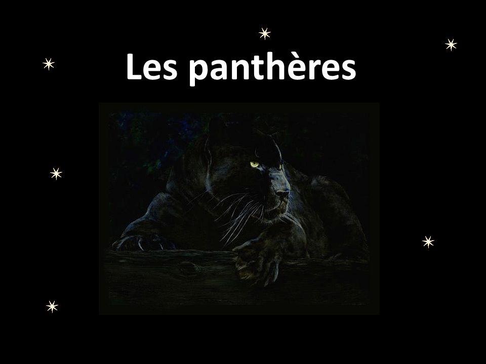 Panthère de Chine Appelée également Panthère de l Amour du nom d un fleuve, la panthère de Chine (Panthera pardus orientalis ) est en voie d extinction.