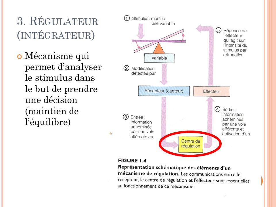 3. R ÉGULATEUR ( INTÉGRATEUR ) Mécanisme qui permet danalyser le stimulus dans le but de prendre une décision (maintien de léquilibre)