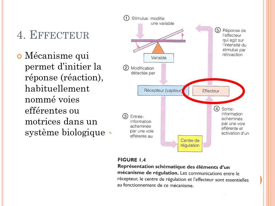 4. E FFECTEUR Mécanisme qui permet dinitier la réponse (réaction), habituellement nommé voies efférentes ou motrices dans un système biologique