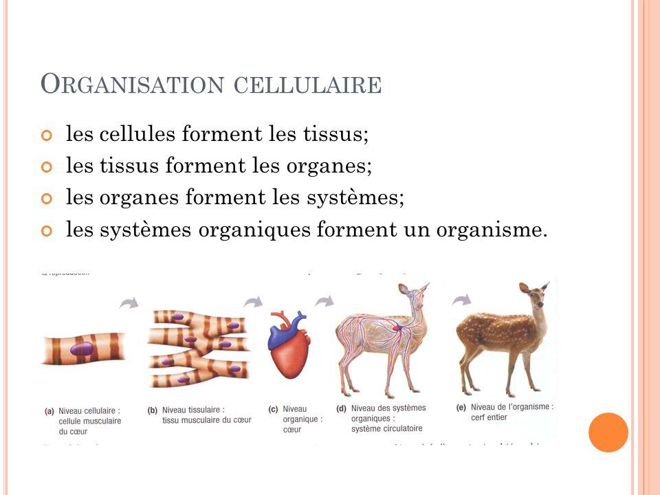 O RGANISATION CELLULAIRE les cellules forment les tissus; les tissus forment les organes; les organes forment les systèmes; les systèmes organiques fo