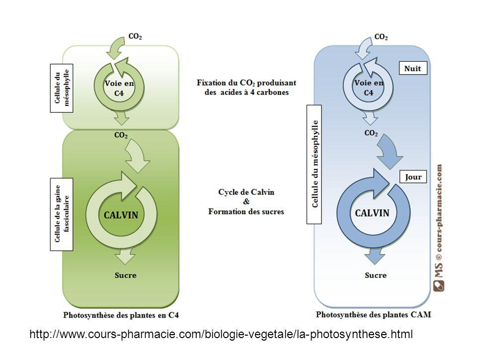 http://www.cours-pharmacie.com/biologie-vegetale/la-photosynthese.html