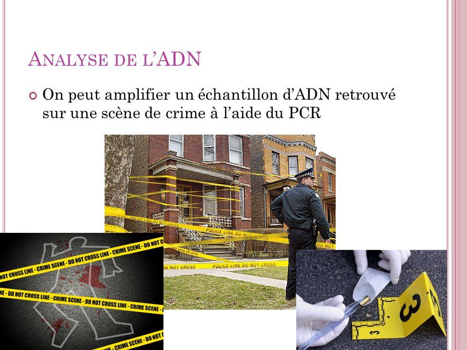 A NALYSE DE L ADN On peut amplifier un échantillon dADN retrouvé sur une scène de crime à laide du PCR