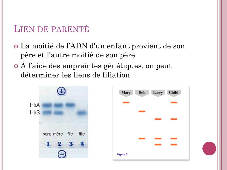 L IEN DE PARENTÉ La moitié de lADN dun enfant provient de son père et lautre moitié de son père. À laide des empreintes génétiques, on peut déterminer