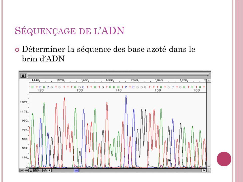 S ÉQUENÇAGE DE L ADN Déterminer la séquence des base azoté dans le brin dADN