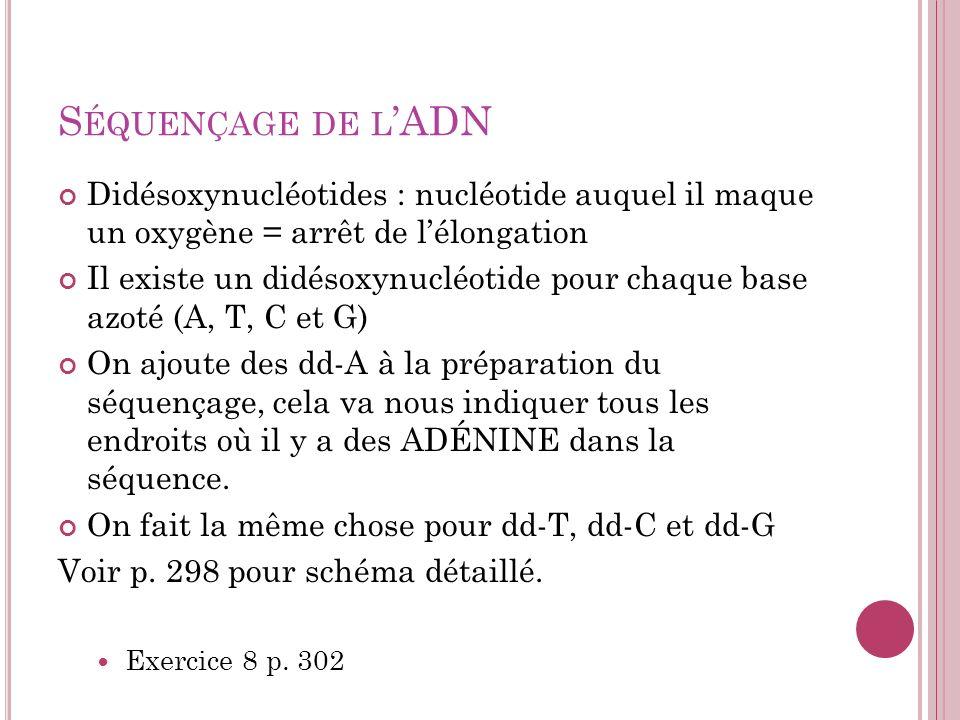 S ÉQUENÇAGE DE L ADN Didésoxynucléotides : nucléotide auquel il maque un oxygène = arrêt de lélongation Il existe un didésoxynucléotide pour chaque ba