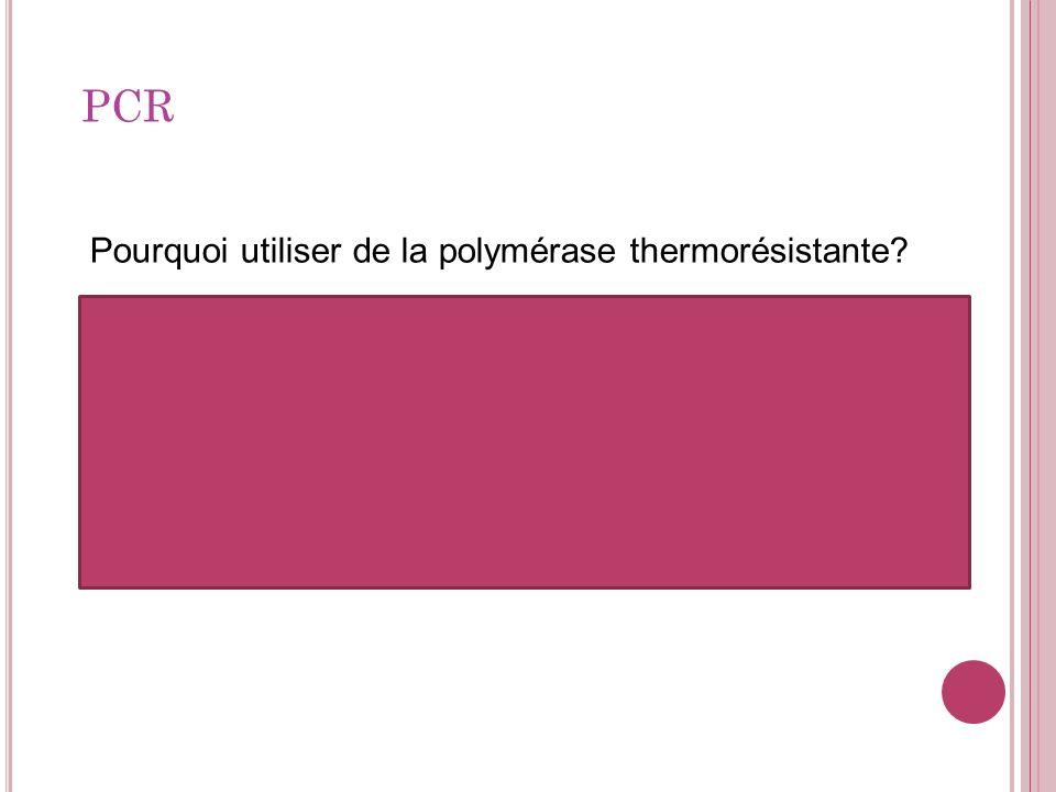 Pourquoi utiliser de la polymérase thermorésistante? On ne veut pas quelle soit dénaturée à létape ou lon chauffe ADN. Si elle nétait pas thermorésist