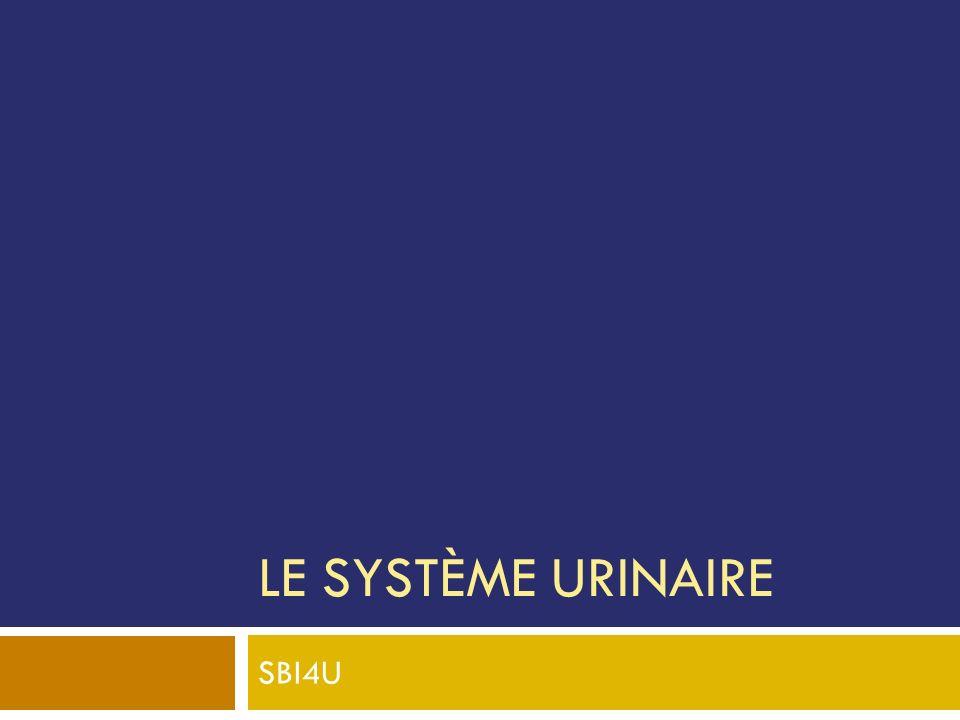 LE SYSTÈME URINAIRE SBI4U