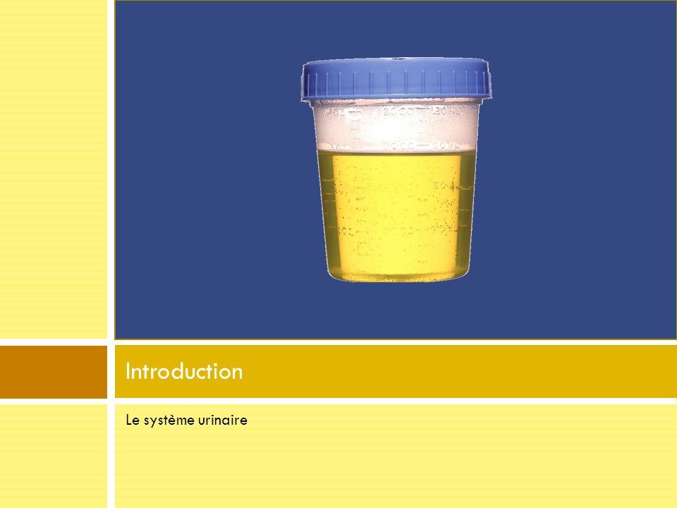 Rôle du système urinaire Lexcrétion durine et le maintient homéostatique Contrôler composition et volume du sang Éliminer les déchets métaboliques toxiques (urée, ammoniaque…) Rétention/Excrétion deau et délectrolytes Maintien du pH sanguin Production dhormones (Rénine et érythropoïétine)